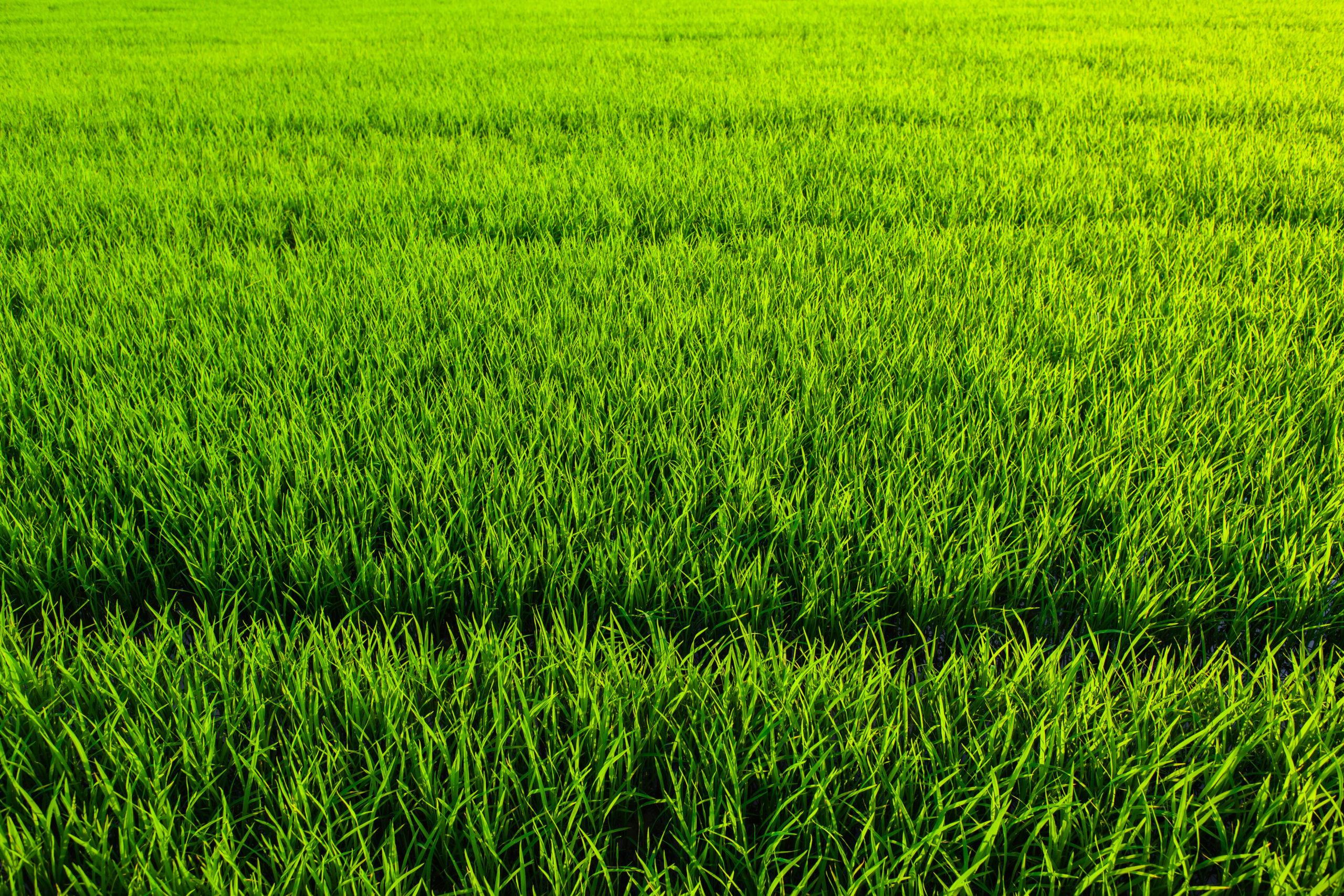 Gazonbemesting groen gras