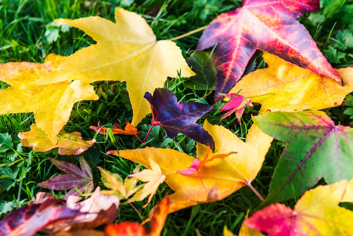 Herfstbladeren op groen gazon